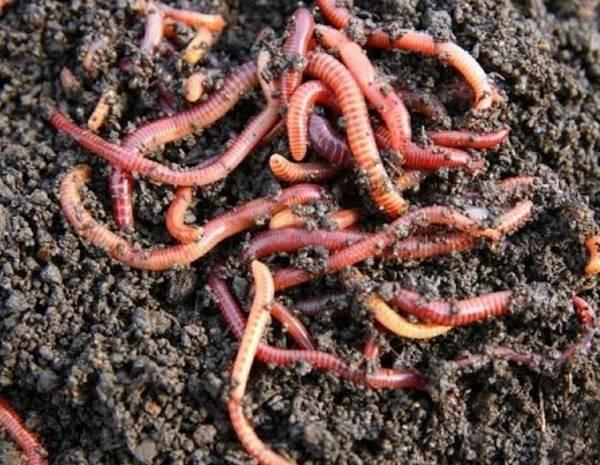 Lombricomposteur city worms