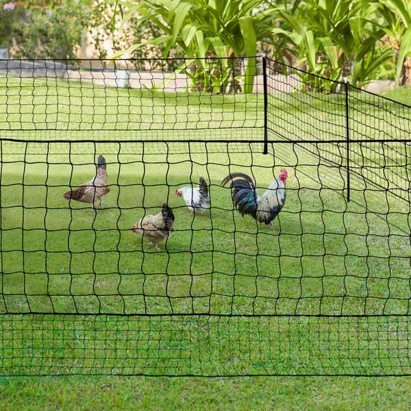poulailler 10 poules